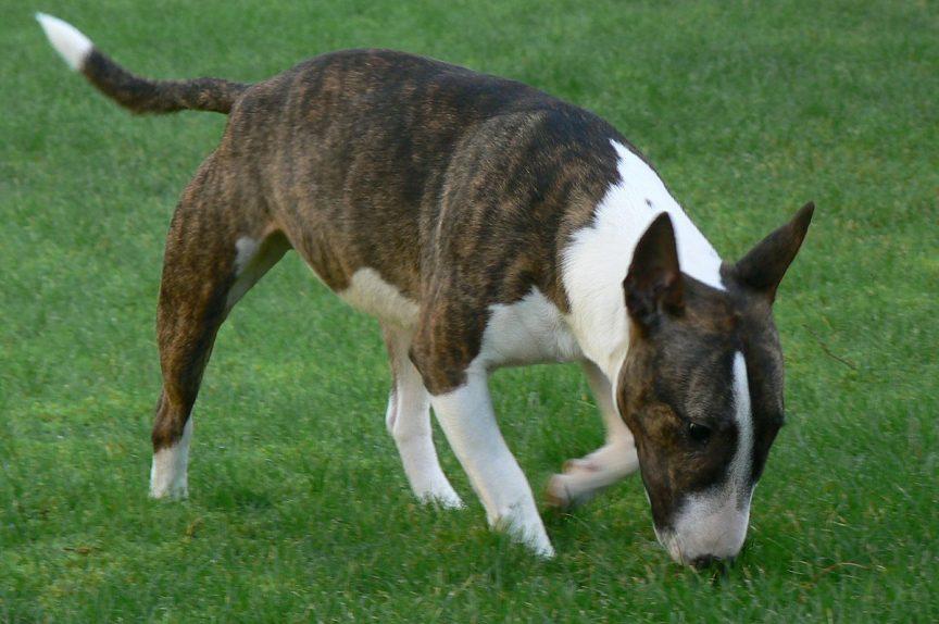 Les troubles obsessionnels compulsifs ou TOC du chien