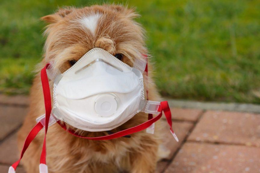 Coronavirus et votre chien