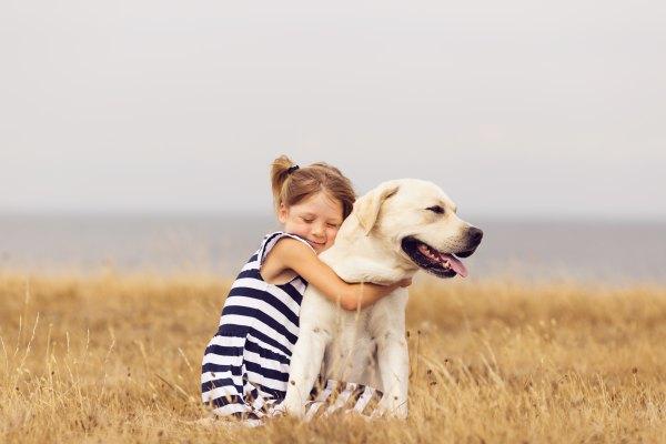 Labrador retriever (5)