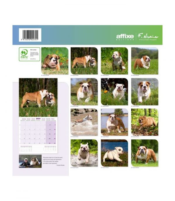 Calendrier Bulldog 2021 1