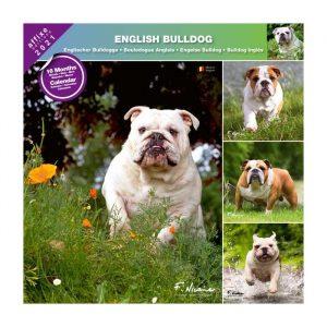 Calendrier Bulldog 2021