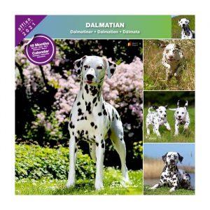 Calendrier Dalmatien 2021