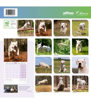 Calendrier Dogo Argentino 2021 1