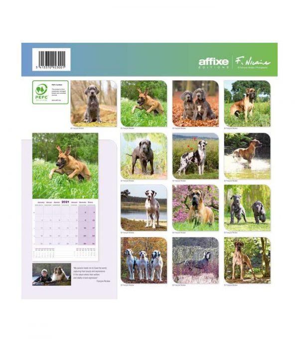 Calendrier Dogue Allemand 2021 1