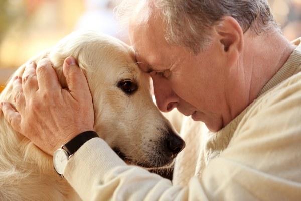 Le deuil de son chien 01