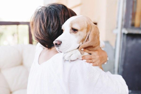 loi sur la maltratance animale