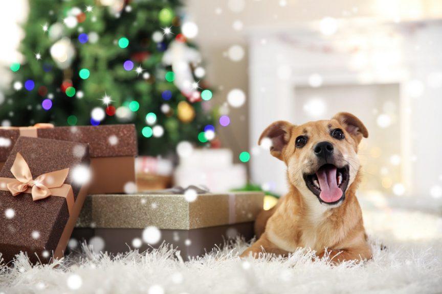 Quels cadeaux lui faire pour Noel 1