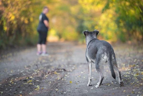 Savoir garder ses distances avec son chien 01