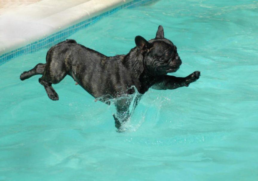 piscine chien 2 Copy