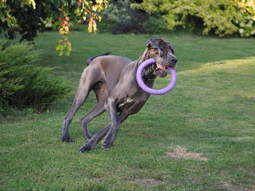 activites grands chiens 1