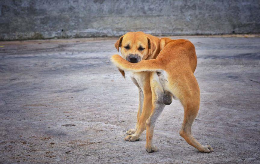 comportement TOC chez les chiens 2
