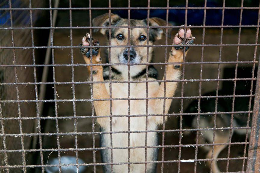 dossier loi maltraitance animale 1